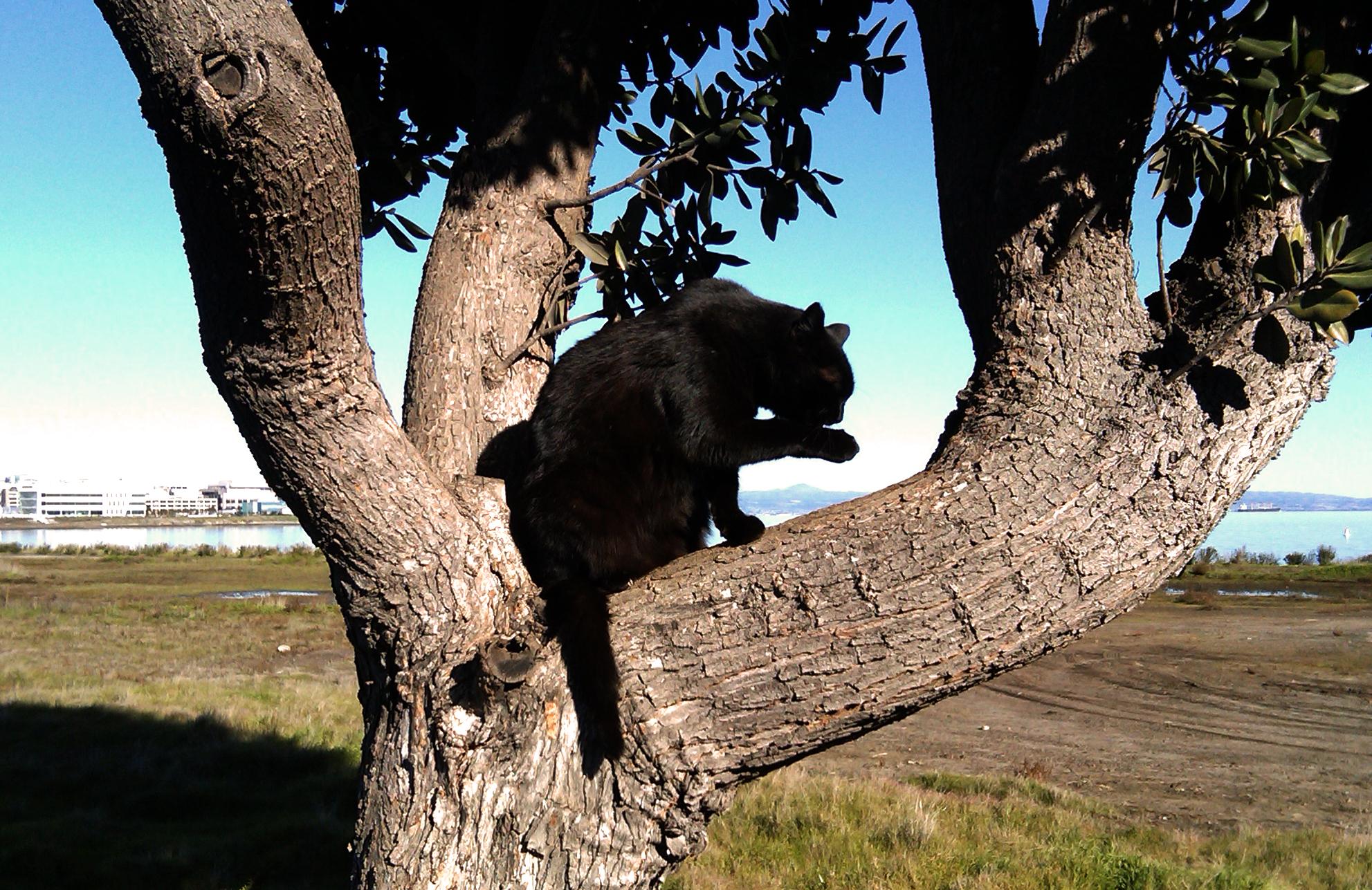 Gabby-in-tree_fix